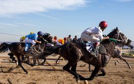 تندباد كوير در پايتخت اسب عرب