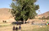 درخت گردوی ۳۷۰ ساله الیگودرز را ببینید
