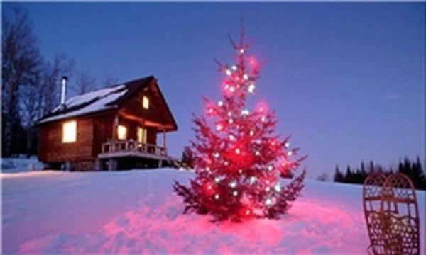 گرانترین درخت کریسمس تاریخ +تصاویر