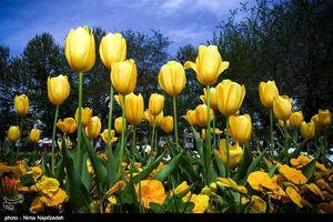 جشنواره بهاری گل - مشهد