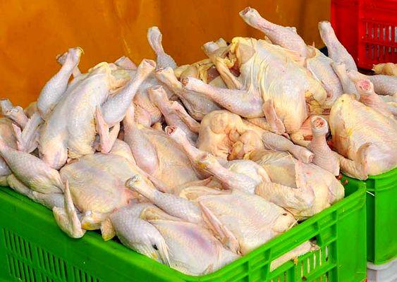 قیمت مرغ عادلانه است/ سرما عامل افزایش قیمت